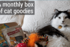 KitNipBox Cat Subscription BoxCyber Monday Deal: 25% Off First Month!