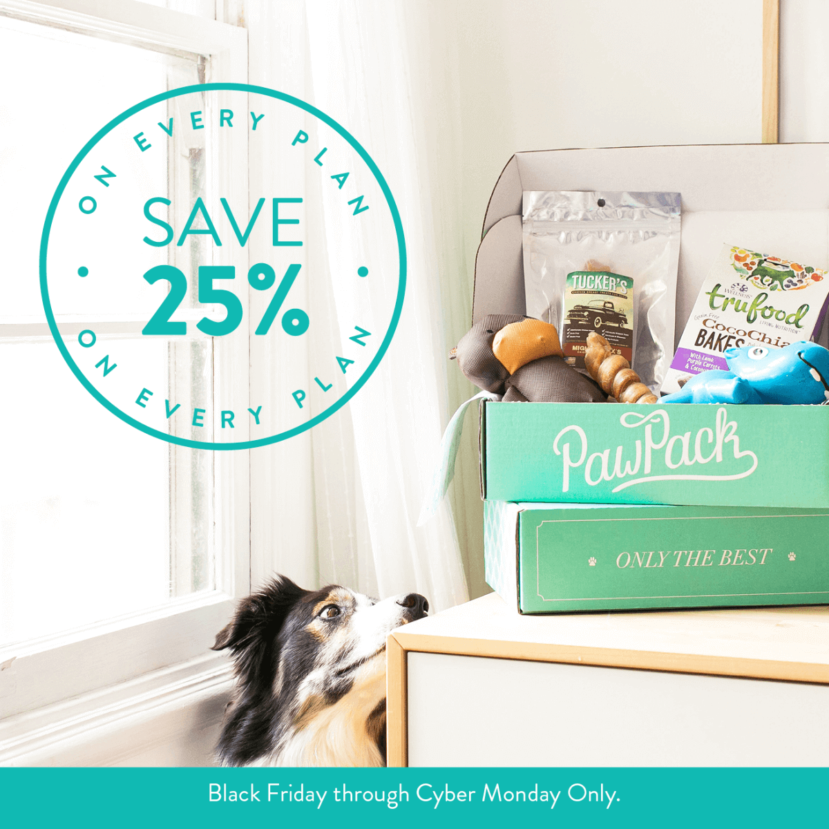 Pawpack Cyber Monday Dog Subscription Box Deal 25 Off All Subscriptions Hello Subscription
