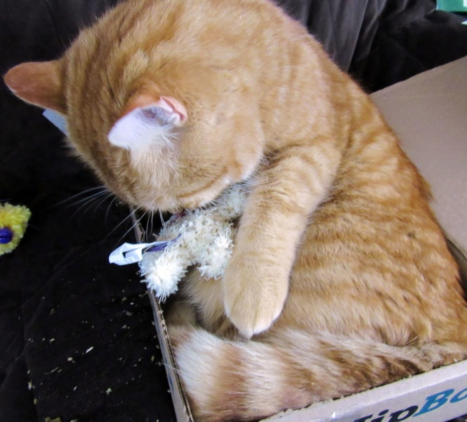 Garfield playing with the flea toy