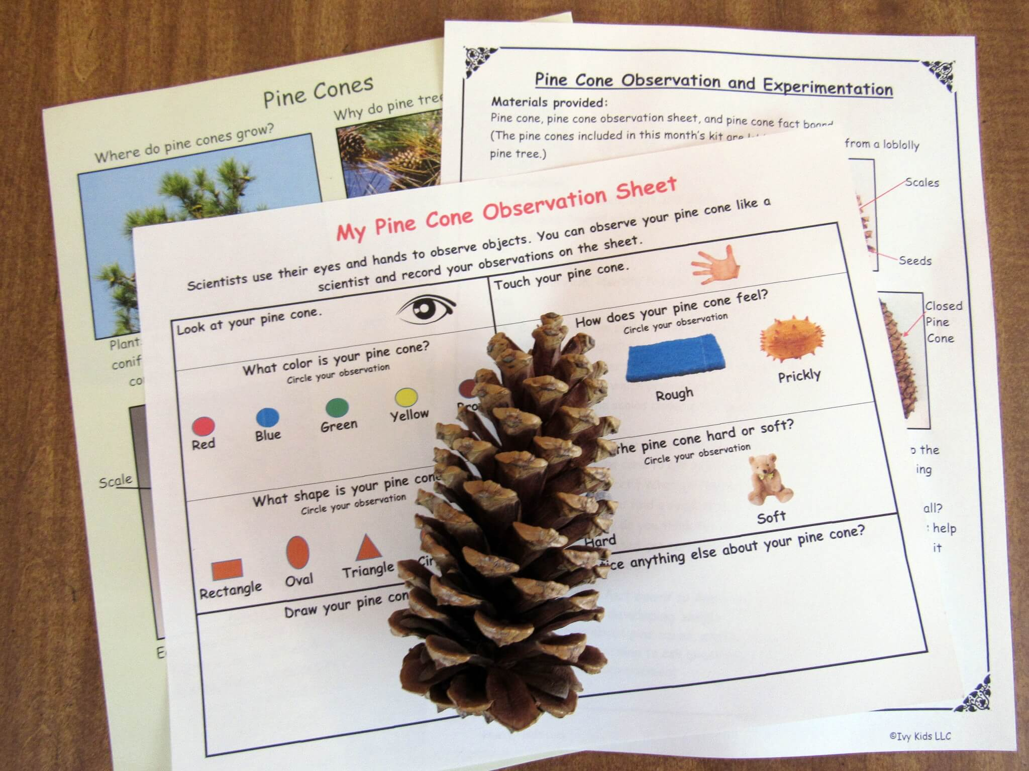 Pine Cone Observation