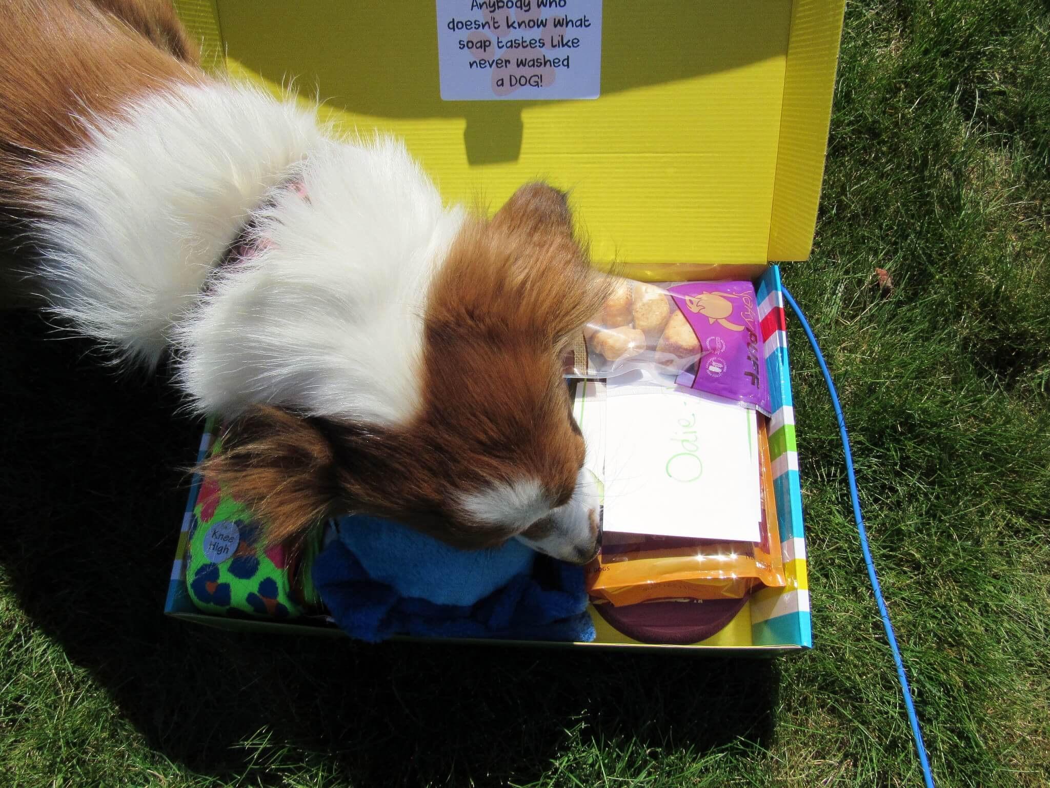 Pet Treater April 2016 Dog Subscription Box Review + Free Pet Bed Coupon!