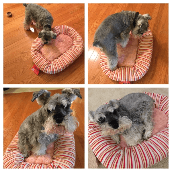 Pet Treater: Free Pet Bed with 3-Month+ Subscription!