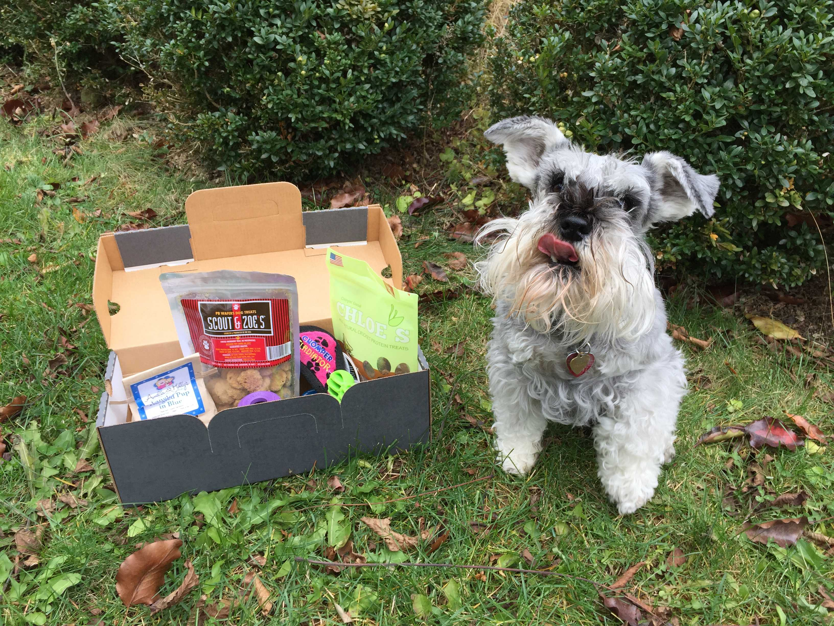 PupJoy November 2016 Subscription Box Review + Coupon