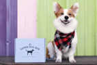 The Dapper Dog Cyber Monday Deal: Save $25 on 3+Month Subscriptions!