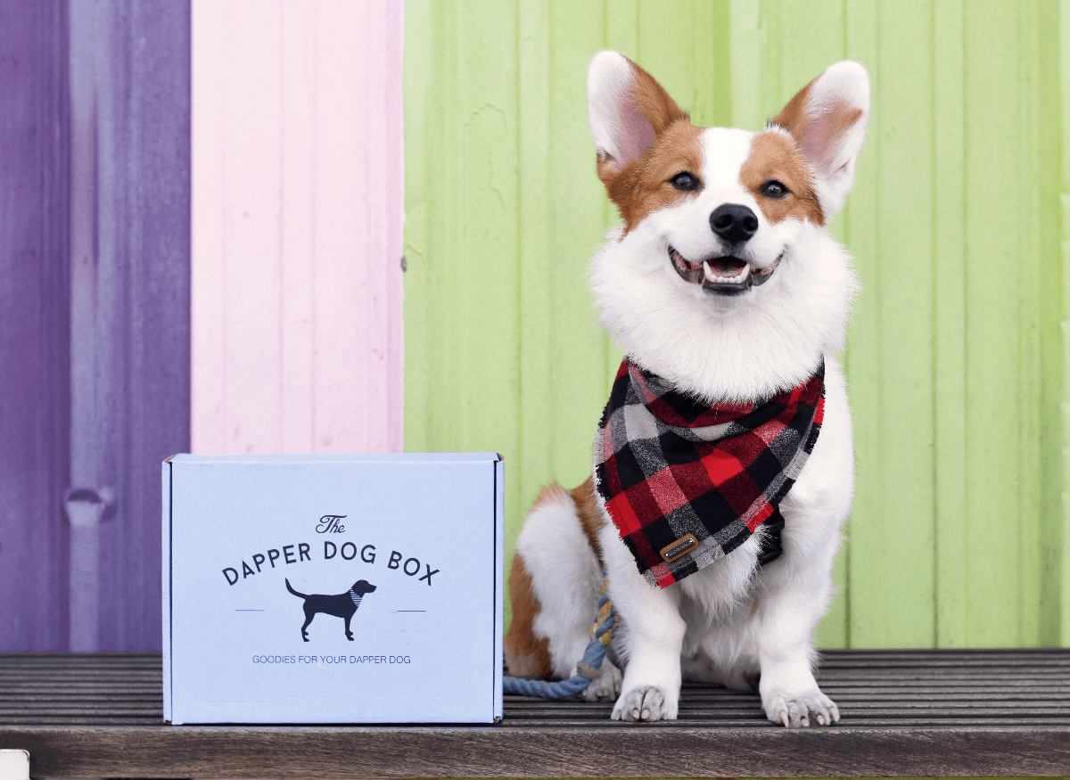 The Dapper Dog Black Friday Deal: 30% Off All Subscriptions Coupon!