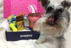PupJoy February 2017 Subscription Box Review + Coupon