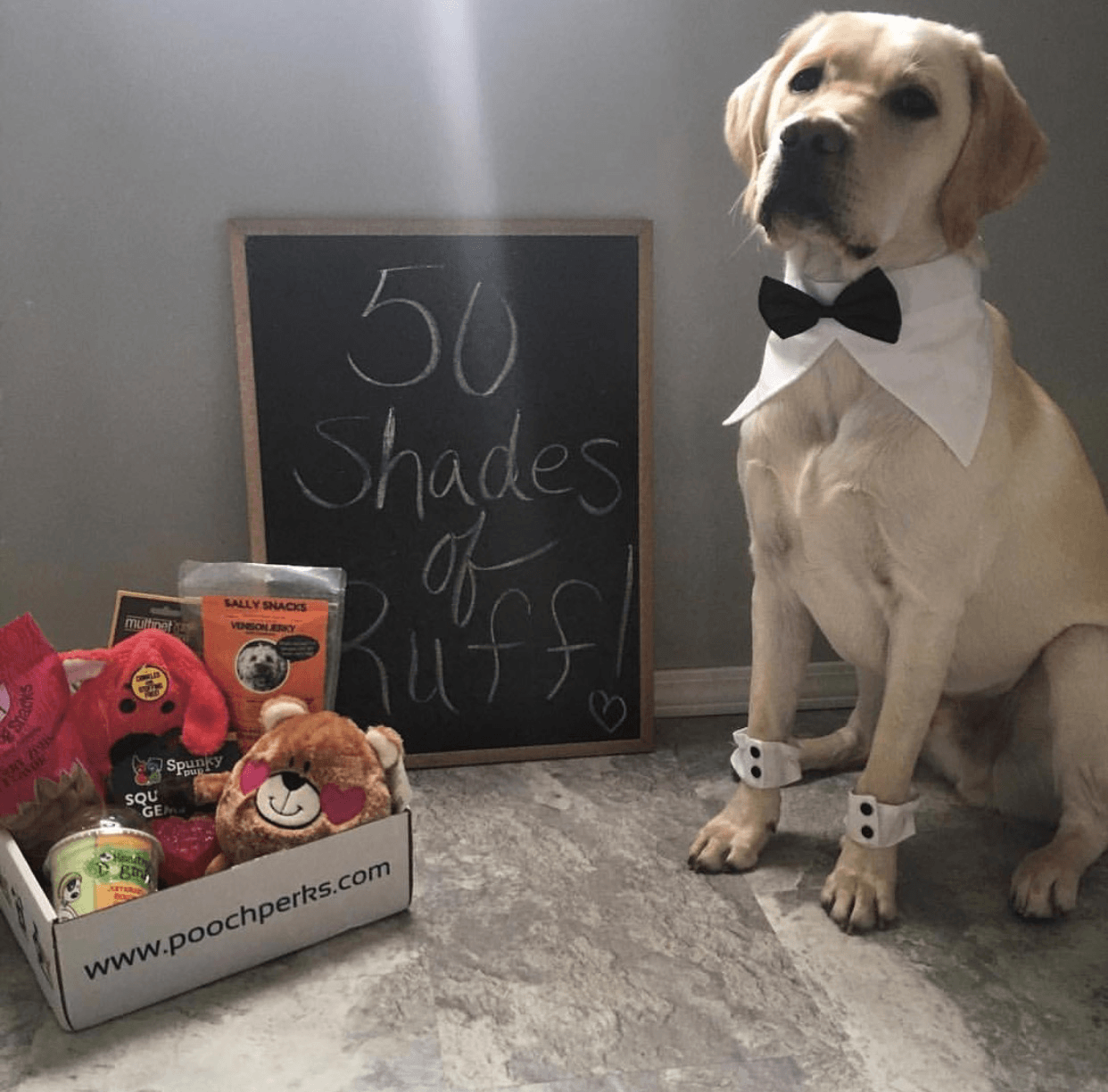 Pooch Perks Valentine's Day Flash Sale: 50% Off First Box!