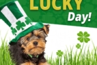 Pooch Perks St. Patrick's Day Sale: $10 Off First Box!