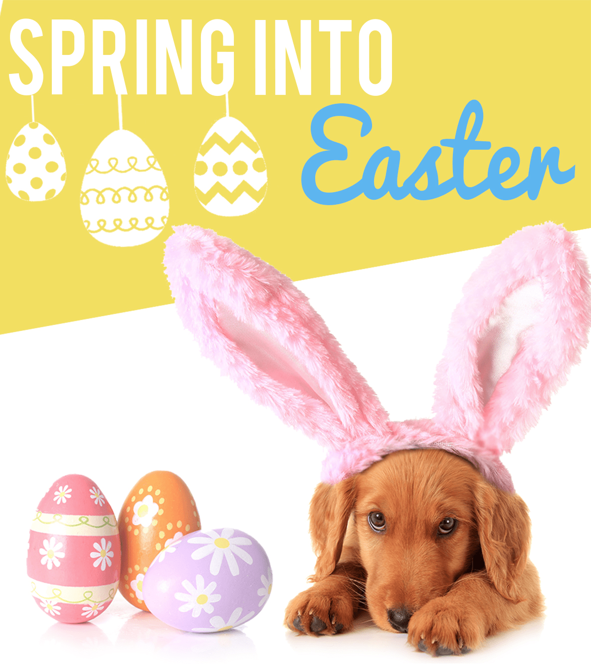 Pooch Perks Easter Sale: 50% Off First Box!
