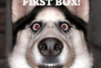Pet Treater Coupon: 25% OFF Your First Box!
