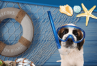 Pooch Perks June 2017 Theme Spoilers + Coupon