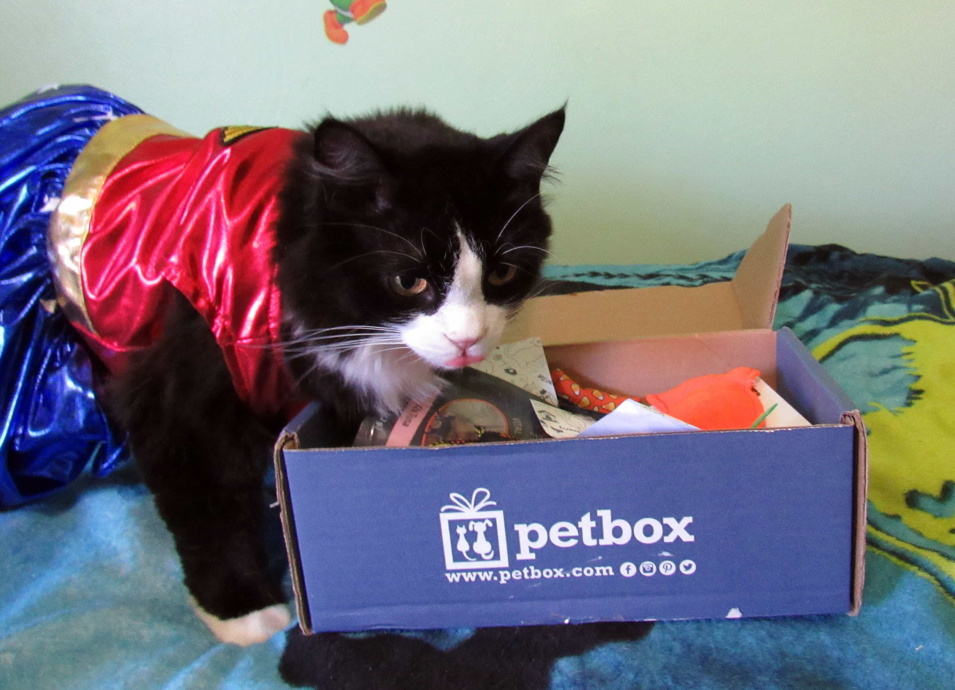 PetBox Cat October 2017 Subscription Box Review + 50% Off Coupon!