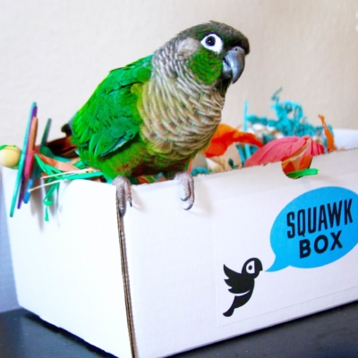 Squawk Box Cyber Monday Deal: Save 15% off!