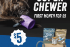 BarkBox Super Chewer Coupon: First Box 50% Off with 6+ Month Subscription!