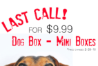 Pet Treater Mini Dog Box Price Increase – Lock In Price NOW!