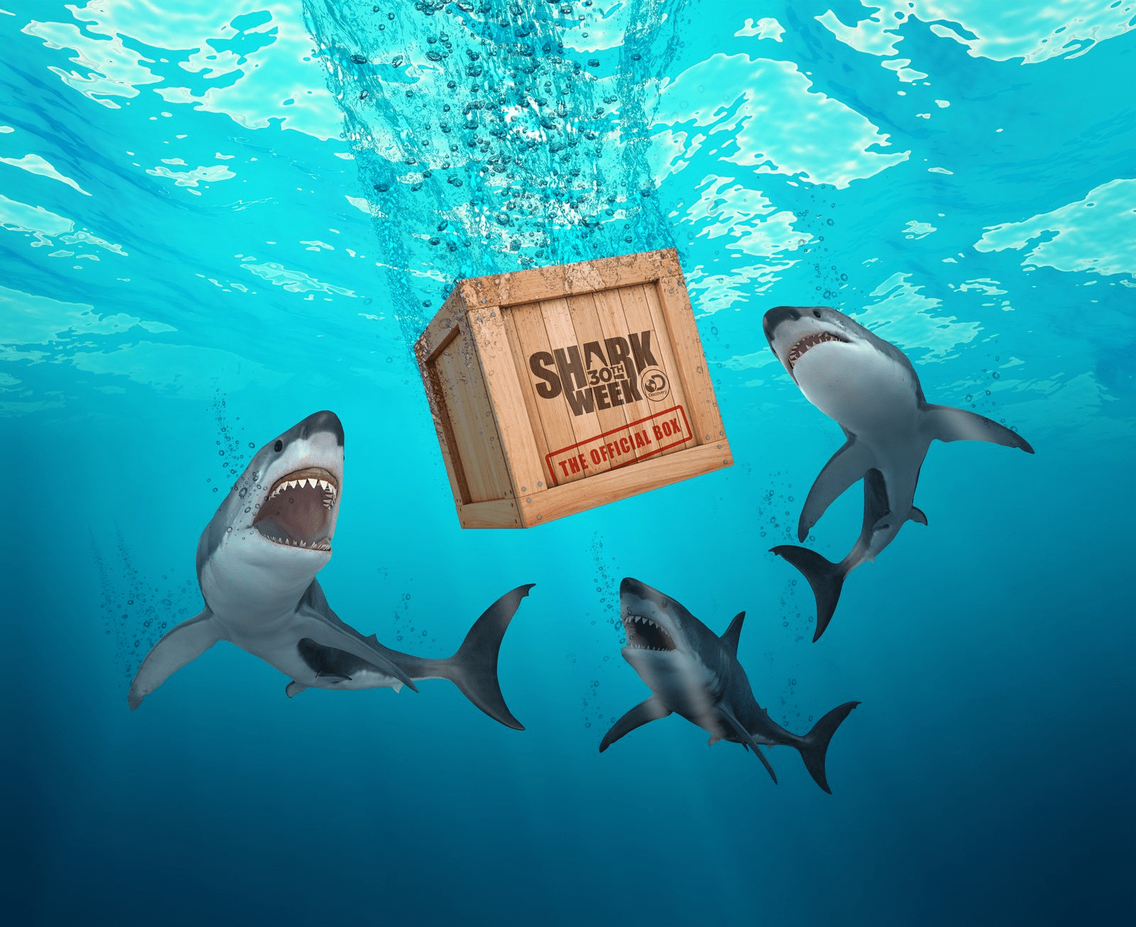 The Official Shark Week Box Now Available On Amazon