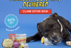 BarkBox Super Chewer Coupon: Get 50% OFF Your First Month of Super Chewer! LAST DAY!
