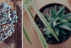 Succulent Studios Coupon: Get $5 Off Your First Month!