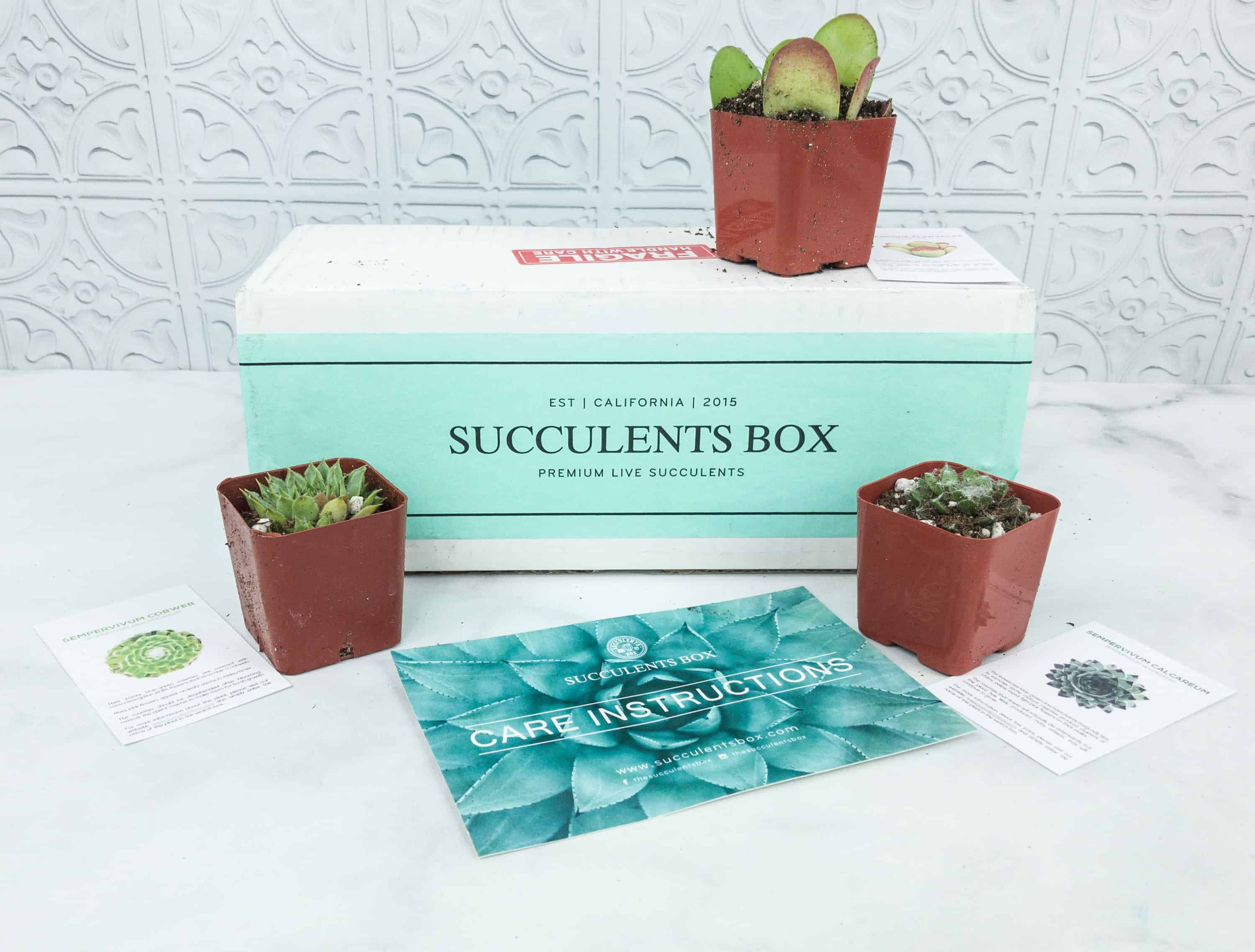 Succulents Box Black Friday Coupon: Get 10% off All Orders of Succulents Box
