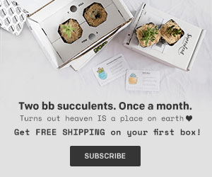 Succulent Studios Coupon: Get Free Shipping On Your First Box!
