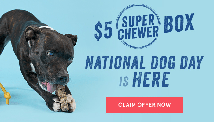 BarkBox Super Chewer National Dog Day Promo: First Box $5 with 6+ Month Subscription!