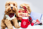 The Dapper Dog Holiday Coupon: Get 10% Off All Gift Subscriptions Coupon!