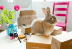 Love Goodly Subscription Update + Coupon!