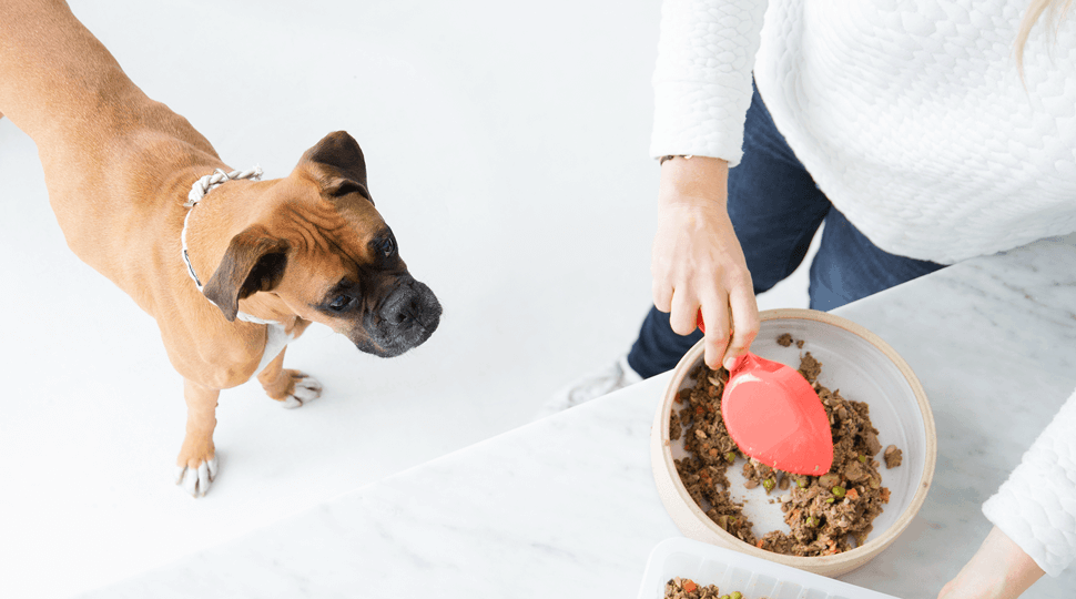 Ollie Dog Food Black Friday 2018 Coupon: Get 60% Off First Box + FREE Bag of Treats!