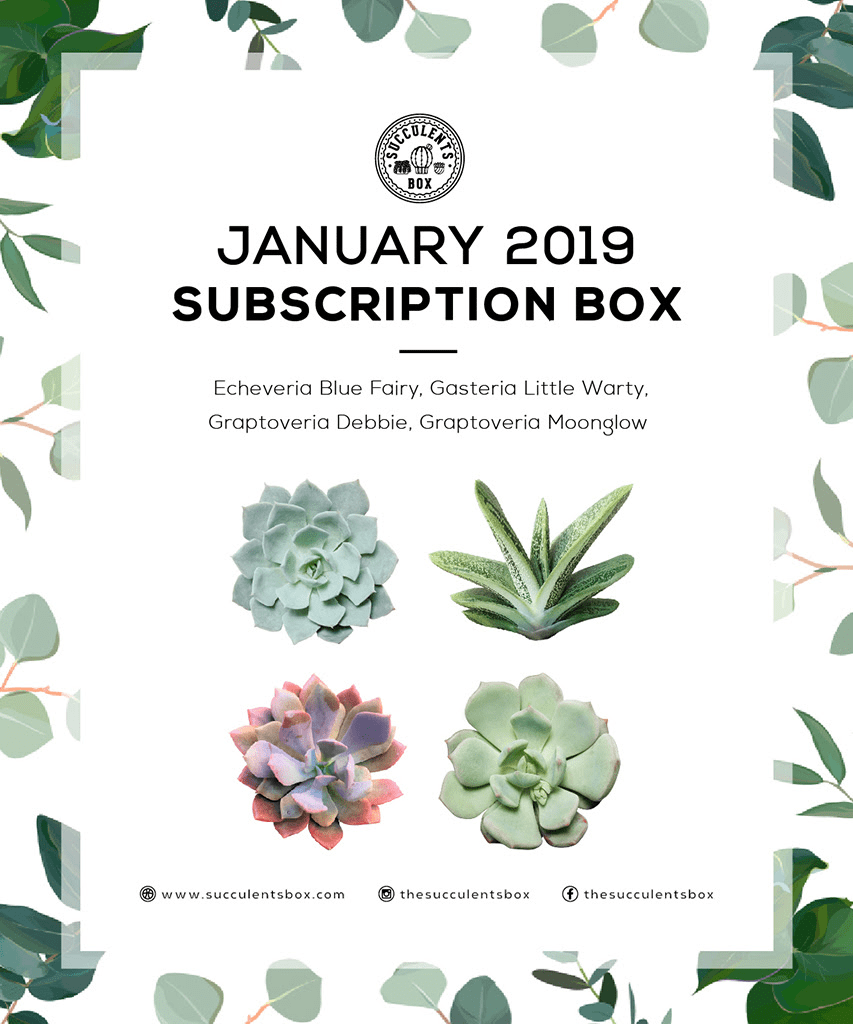 Succulents Box January 2019 Full Spoilers + Coupon!