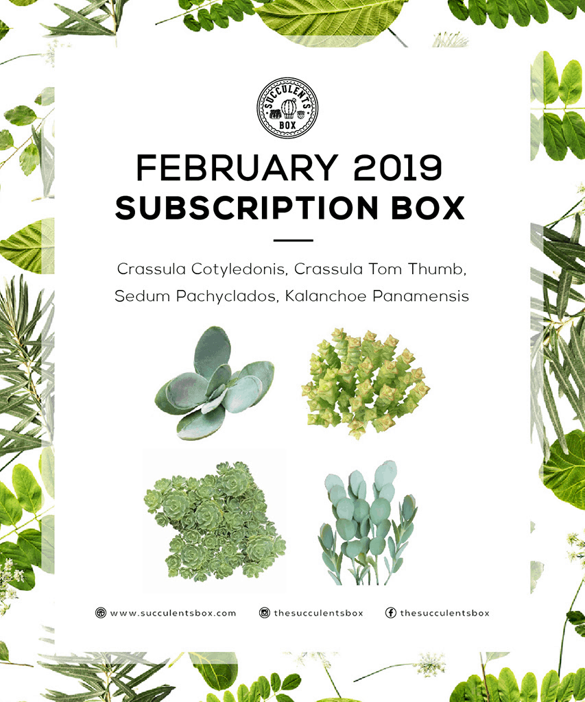 Succulents Box February 2019 Full Spoilers + Coupon!