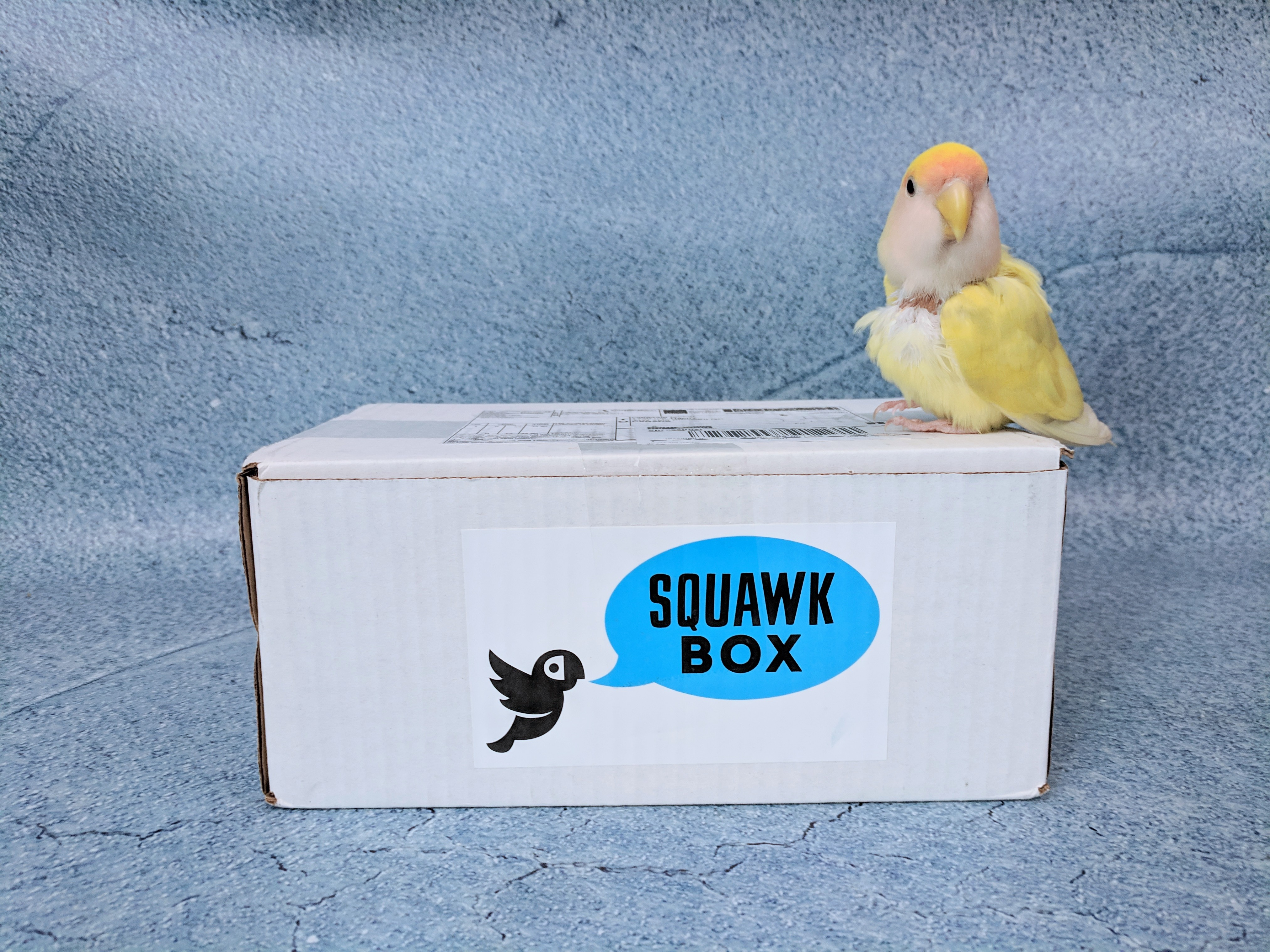 Squawk Box January 2019 Subscription Review - hello subscription