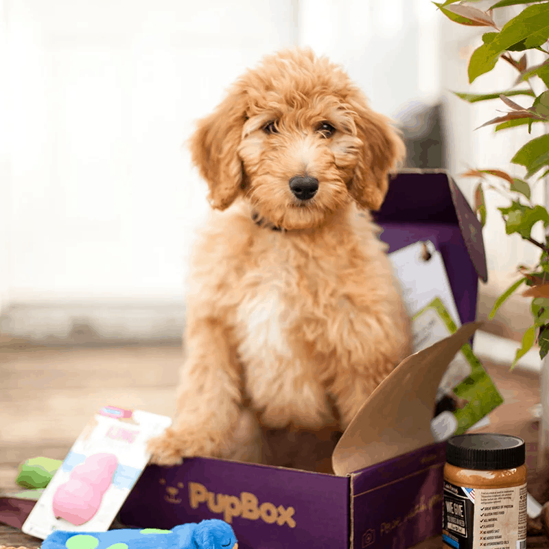 PupBox National Puppy Day Coupon: First Box $5!