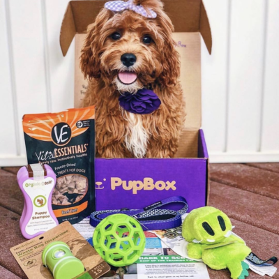 PupBox Sale: Get 60% Off Your First Box!