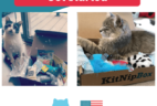 KitNipBox Fourth of July Sale: Get 16% Off!
