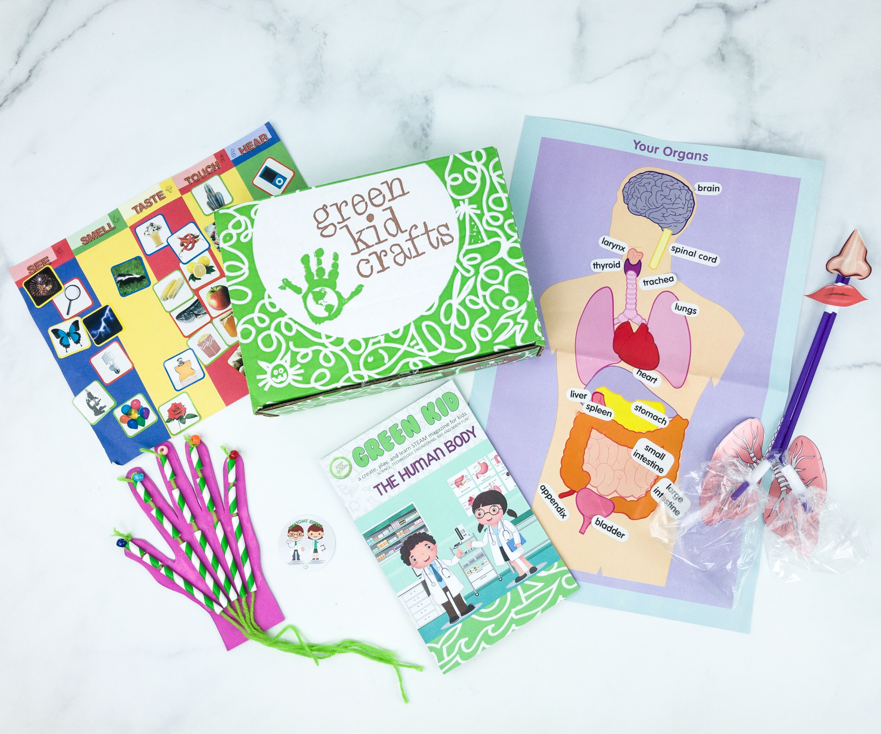 Green Kid Crafts THE HUMAN BODY Subscription Box Review + 50% Off Coupon!