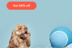 Ollie Dog Labor Day Coupon: Get 50% Off First Box + FREE Probiotics & Treats!