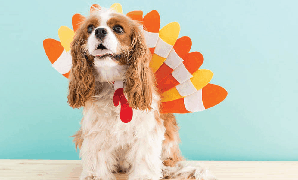 Raw Paws Early Thanksgiving Day 2019 Sale: Get Up To 20% Off!