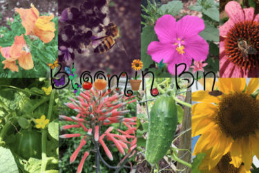 Bloomin' Bin Black Friday Deal: Save 25% for Black Friday!