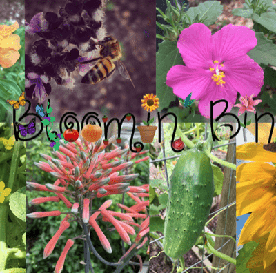Bloomin' Bin Cyber Monday Deal: Save 30% for Cyber Monday!