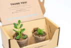 Succulent Studios Cyber Monday Deal: Save 61% on your first box!