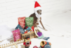 BarkBox Cyber Monday Sale: $5 First Box + FREE Extra Toy!