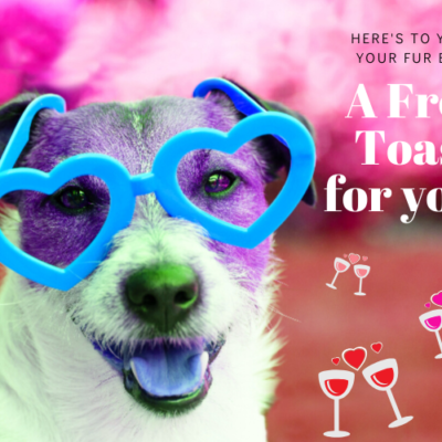 Pet Treater Valentine's Day Coupon: FREE Bottle of Dog Pawrignon Rosé!