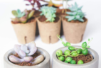 Succulent Studios Coupon: Get 20% Off + FREE Shipping!