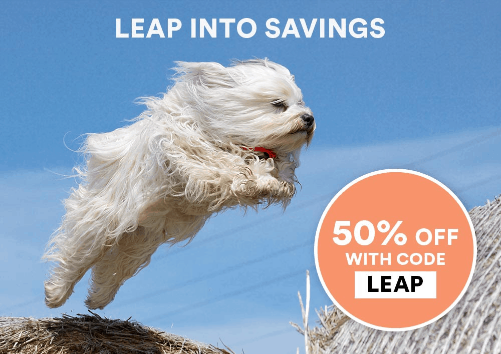 Spot and Tango Leap Day Sale: Get 50% Off!