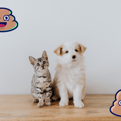 Pet Treater Coupon: Get 50% Off!