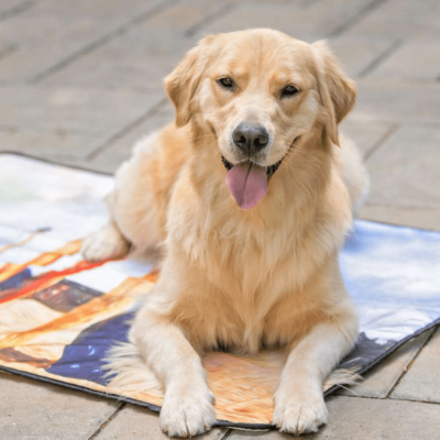 BoxDog Coupon: FREE Dog Mat with Subscription!