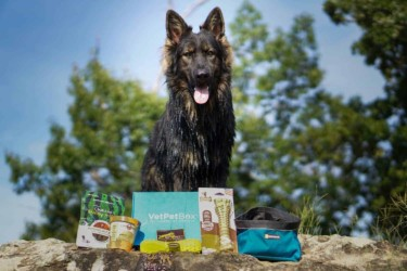 VetPet Box – Dog & Puppy